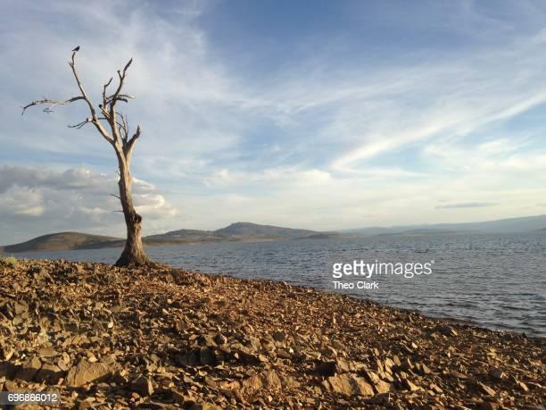 Tree on Lake Eucumbene