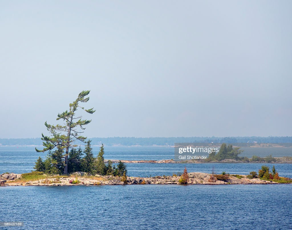 Tree on Sparse Small Rock Island