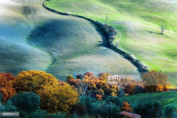 Tree on the hill,autumn,oak,olive grove,Tuscany,Italy