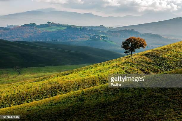 Tree on the hill,autumn,oak,Tuscany,Italy