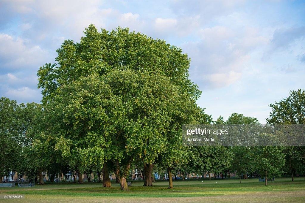 Tree on Victoria park