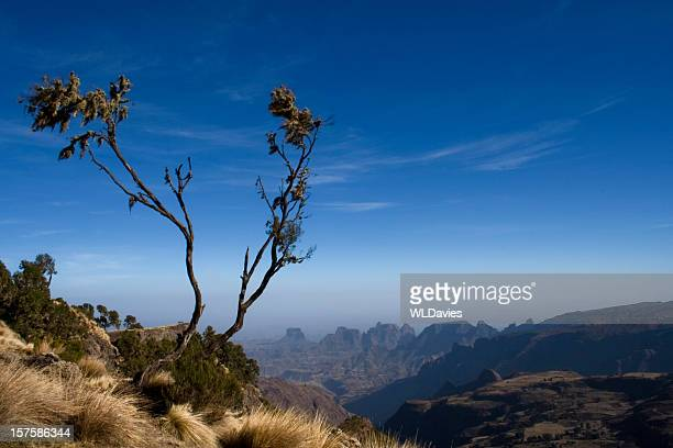 Tree over Simien Mountains