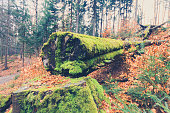 tree overgrown with moss inside forest macro