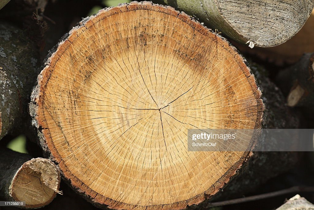 tree pane with annual rings : Stock Photo