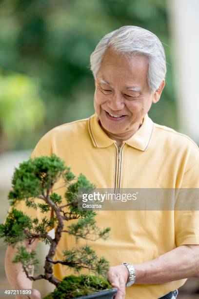 Tree Penjing