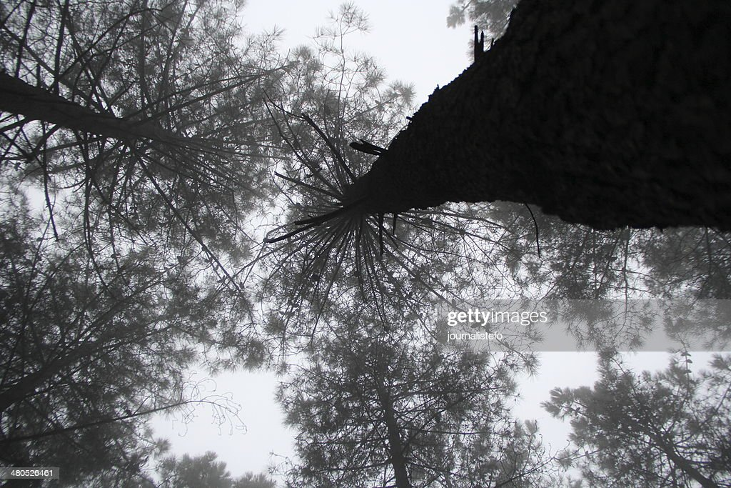 tree : Stockfoto