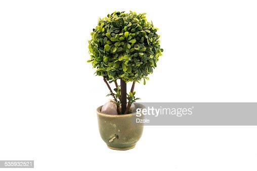 tree : Stock Photo