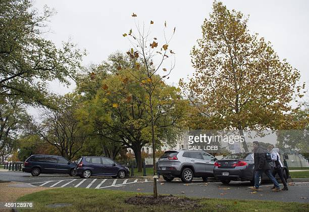 A tree planted in honor of Emmett Till an African American teenager is seen on the grounds of the US Capitol in Washington DC November 17 2014 Till...