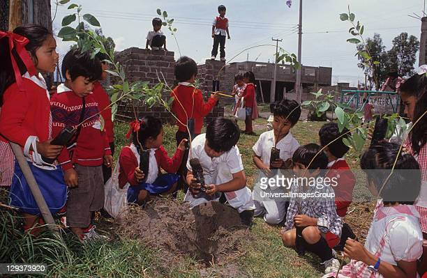 Tree Planting Mexico City Chalco District In an attempt to alleviate the environmental problems in the city the government is providing citizens with...