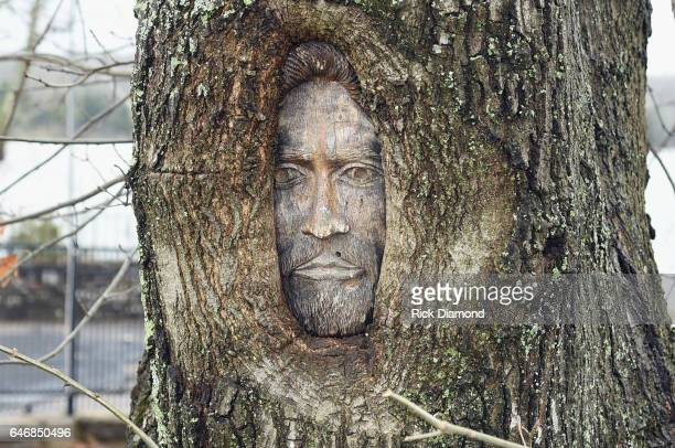 A tree portrait of Barry Gibb of the Bee Gees at the former estate of Johnny Cash and June Carter Cash Barry Gibb once oened this property after June...