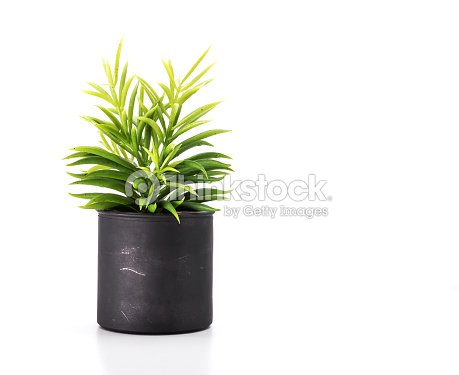 Tree pot on white background and copyspace. Houseplant for decorations. : Stock Photo