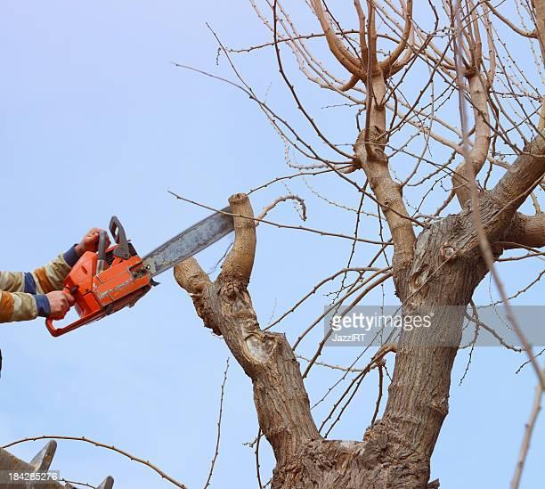 Baum Stutzen saw