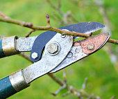 Tree Pruning Shears