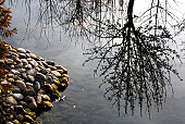 Tree reflected in water surface in Federico Garcia Lorca park, Granada, Andalusia, Spain