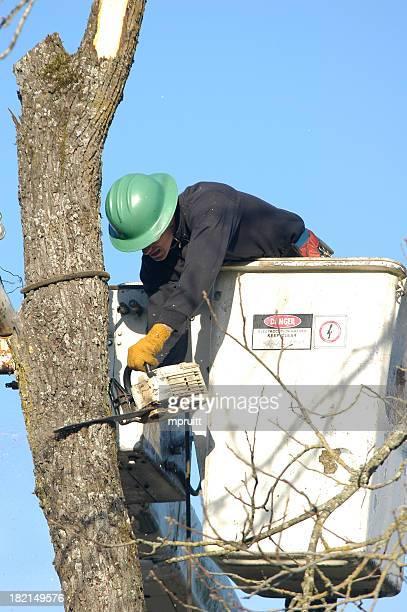 Baum entfernen