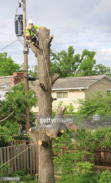 Tree Removal/Arborist