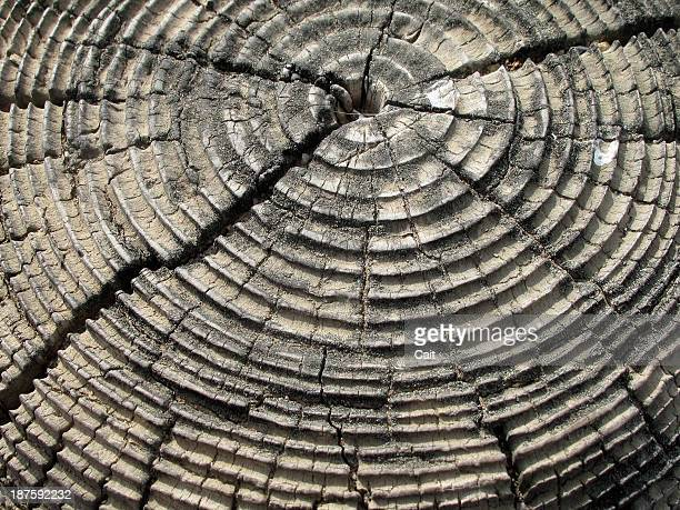 Tree rings on an old cracked tree stump