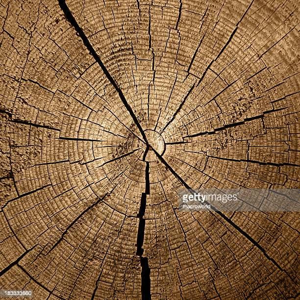 Baum Ringe
