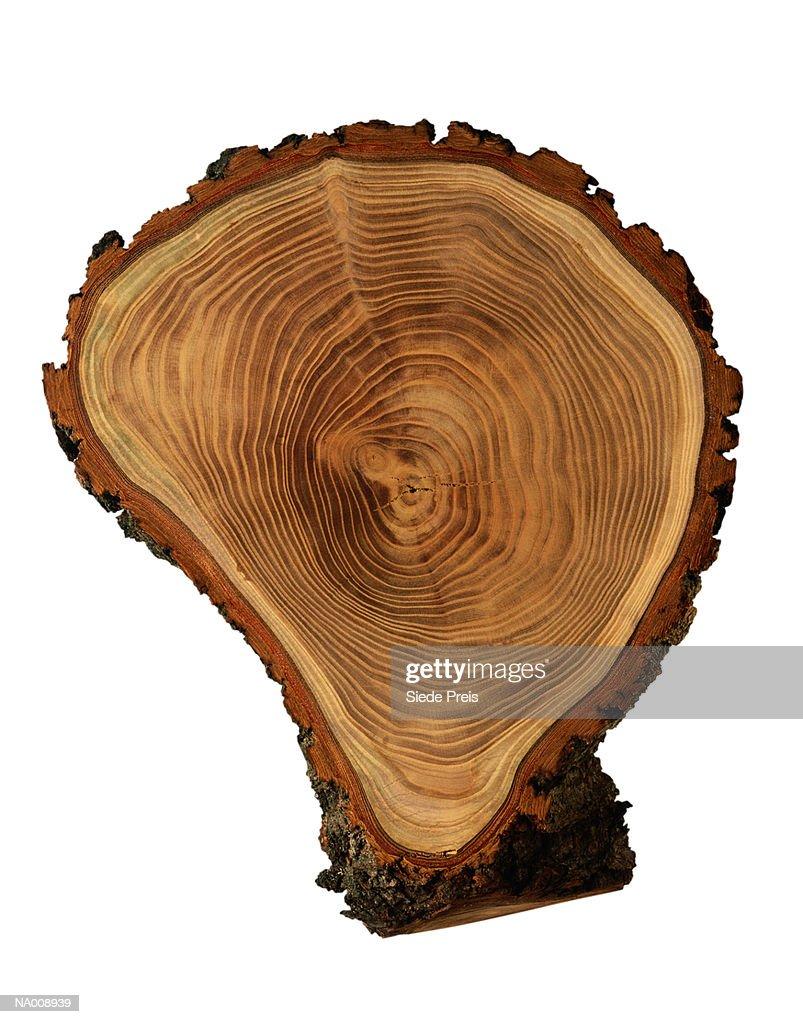 Tree Rings : Stock Photo