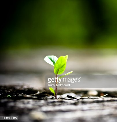 Tree Sapling Growing out of a railroad bridge : Stock Photo