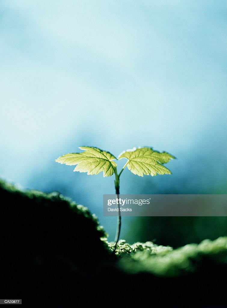 Tree seedling, close-up