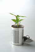 Tree seedlings of coffee in the can