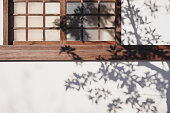 Tree Shadow sunlight Shade on wooden window wall Background