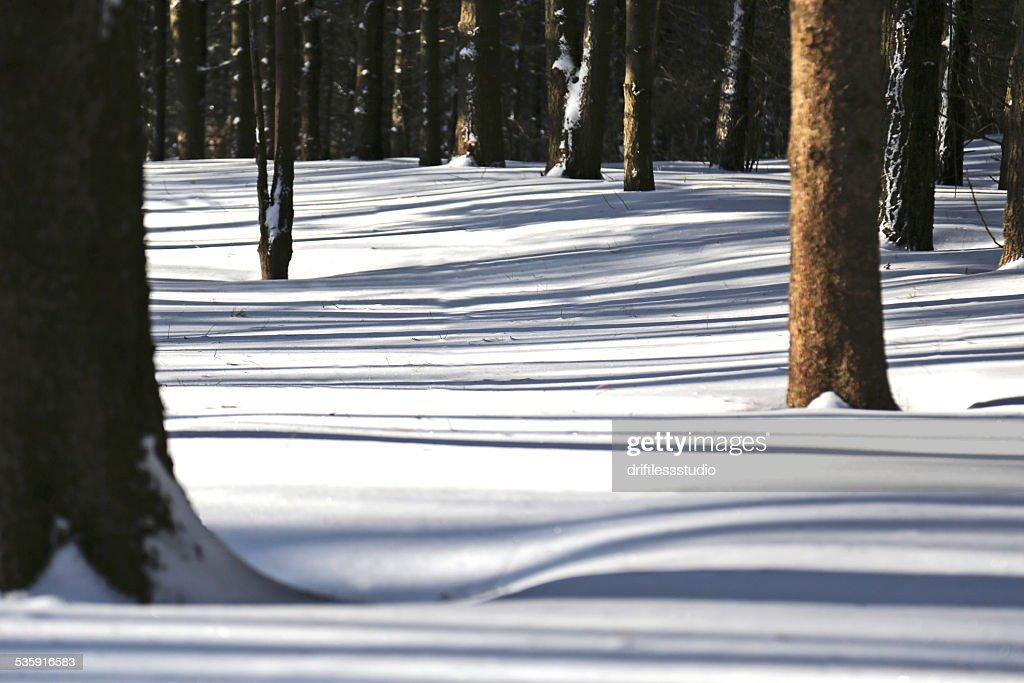 Sombras de árvore na Neve : Foto de stock