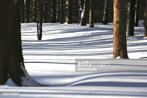 Tree Shadows in the Snow : Stock Photo