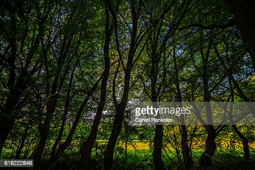 Baum Silhouette : Stock Photo