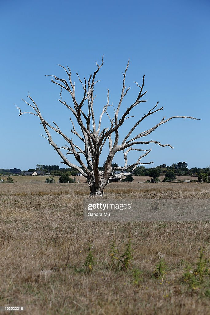 A tree sits in the middle of a drought strickened paddock on March 12, 2013 in Waiuku, New Zealand. Drought was declared in several North Island areas last week including South Auckland, Northland, Bay of Plenty and Waikato. It is reported by the end of the week the entire North Island will be declared a drought zone.