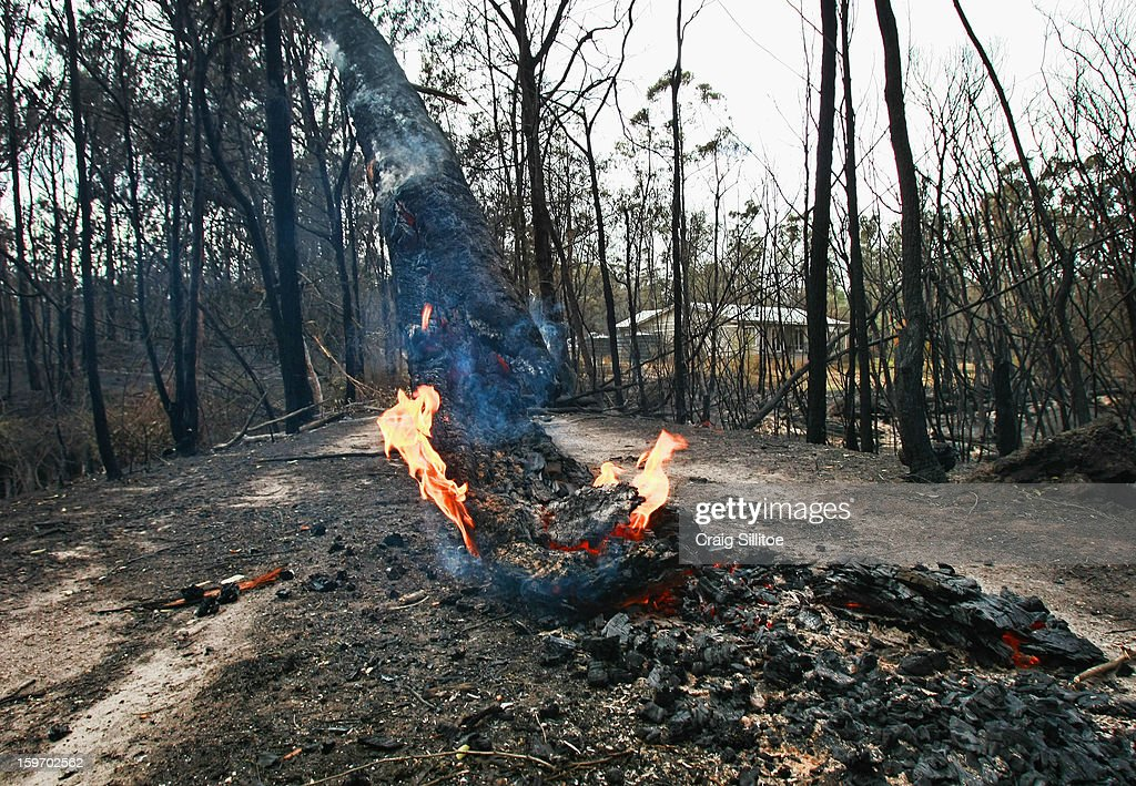 A tree smolders in the town of Seaton on January 19, 2013 in Melbourne, Australia. Bushfires in Victoria have claimed one life and destroyed several houses. Record heat continues to create extreme fire conditions throughout Australia.