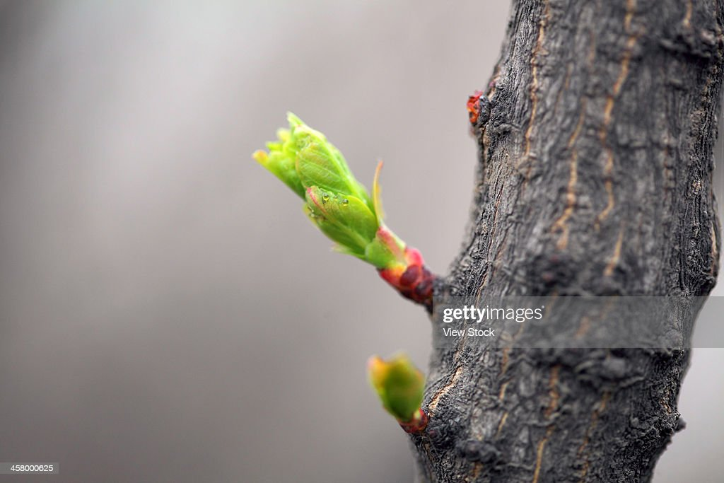 Tree sprout