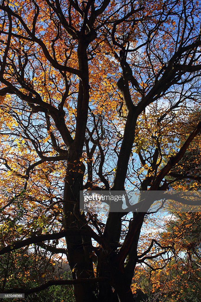 Tree Structure View in Autumn : Stock Photo