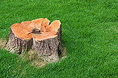 tree stump and green grass field of home garden