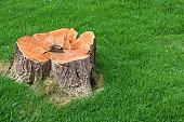 tree stump and green grass field of home garden