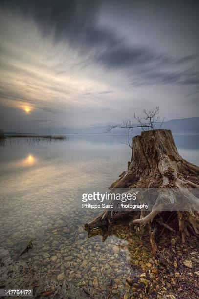 Tree stump by lake