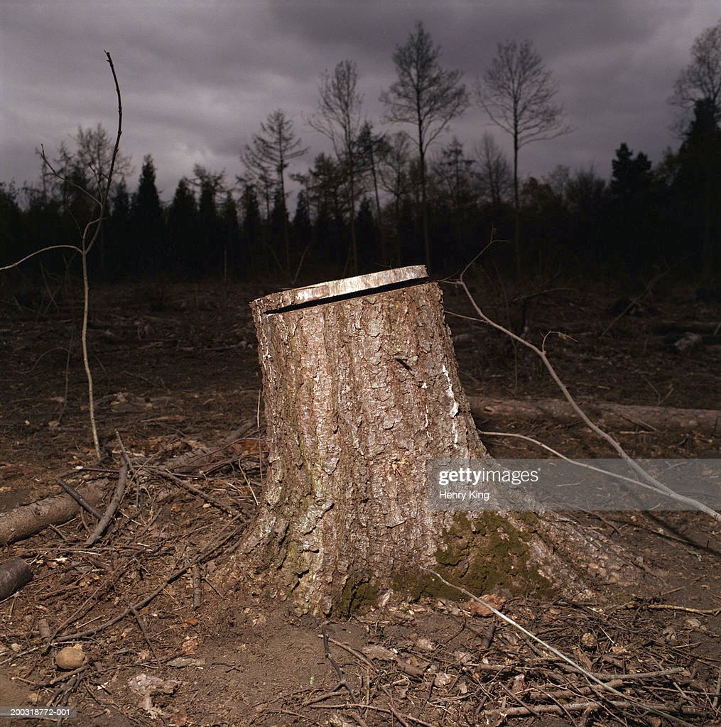 Tree stump in forest, night : Stock Photo