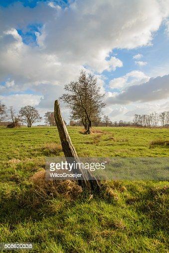 Tree stump in the grassland : Stock Photo
