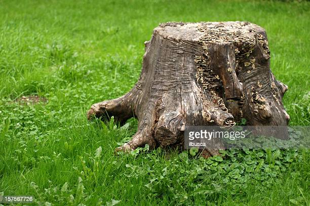 Tree stump on grass with copy space