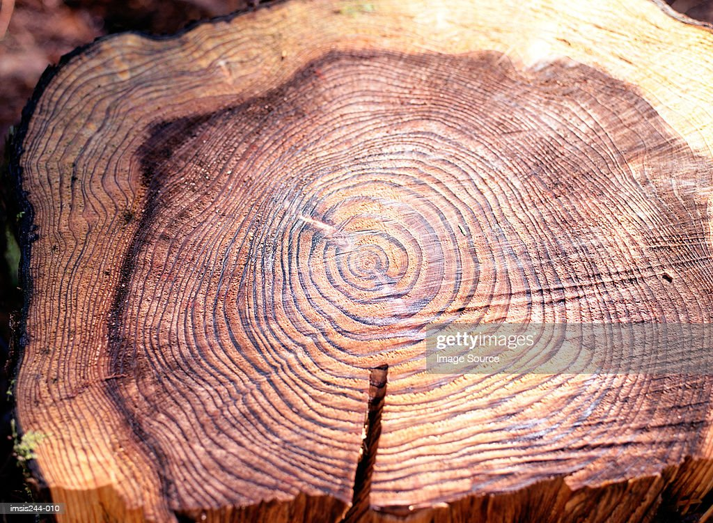 Tree stump : Stock Photo