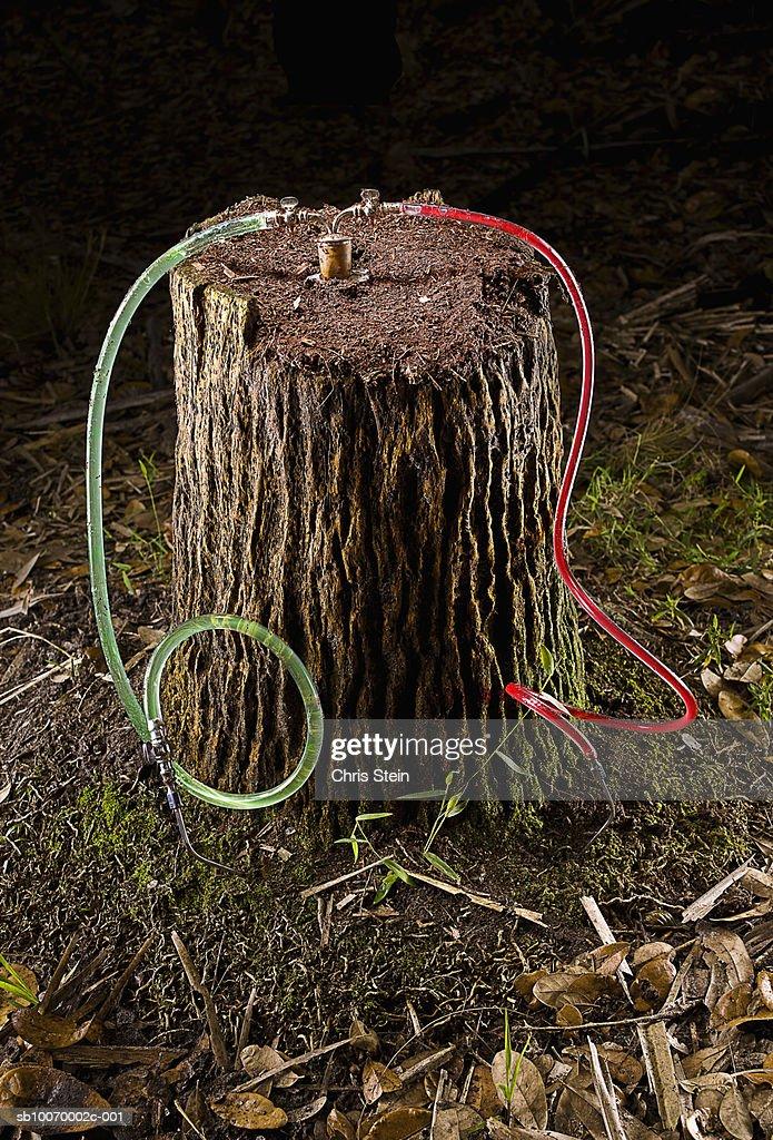Tree stump receiving transfusion : Stock Photo