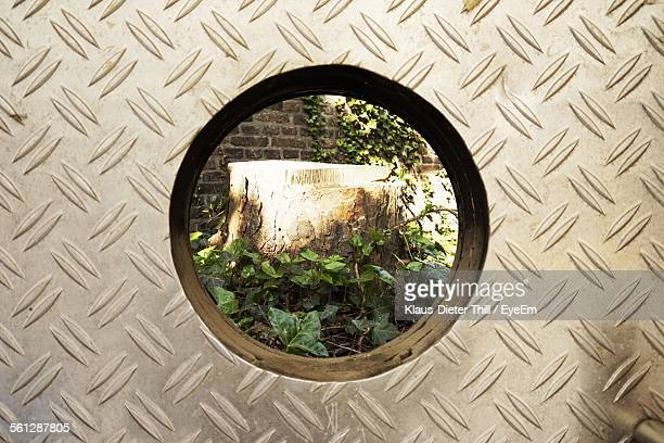 Tree Stump Seen Through Hole