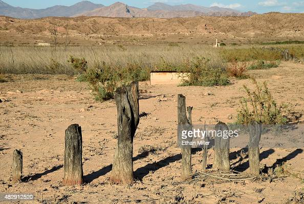 Tree stumps used as a boundary marker are shown in the ghost town of St Thomas on August 3 2015 in the Lake Mead National Recreation Area Nevada The...