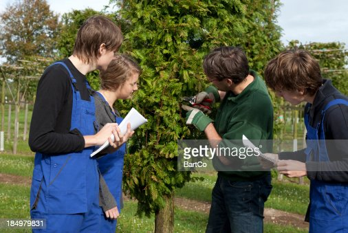 Tree surgeon and trainee
