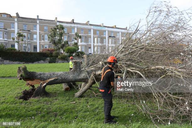 A tree surgeon cuts up a fallen tree in Penzance on October 16 2017 in Cornwall England The hurricane comes exactly 30 years after the Great Storm of...
