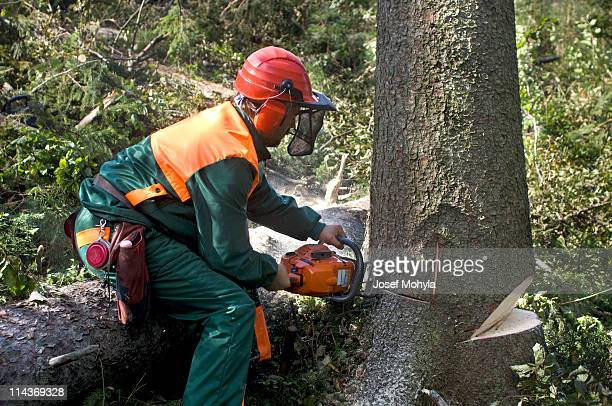 A tree surgeon removing a tree