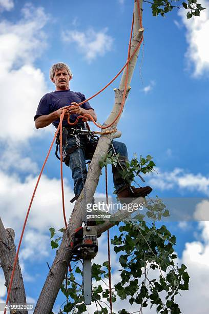 Tree Surgeon working on a Trunk