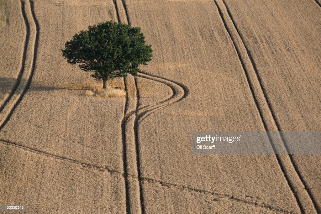A tree surrounded by crops is seen from a hot air balloon on the first full day of the Bristol International Balloon Fiesta on August 8 2014 in...