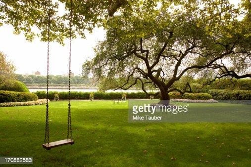 Tree swing in urban park